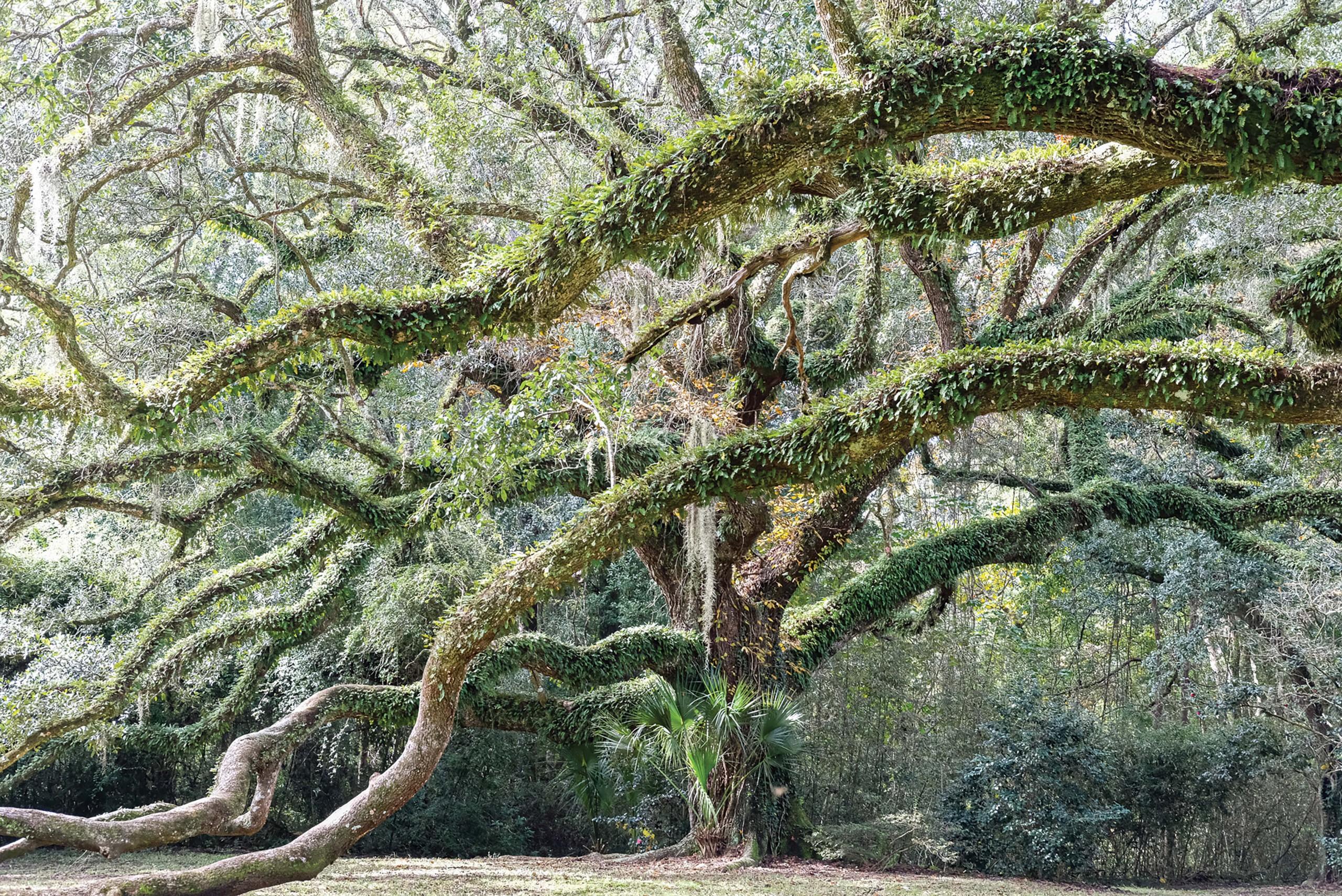 Nature Averyisland 09